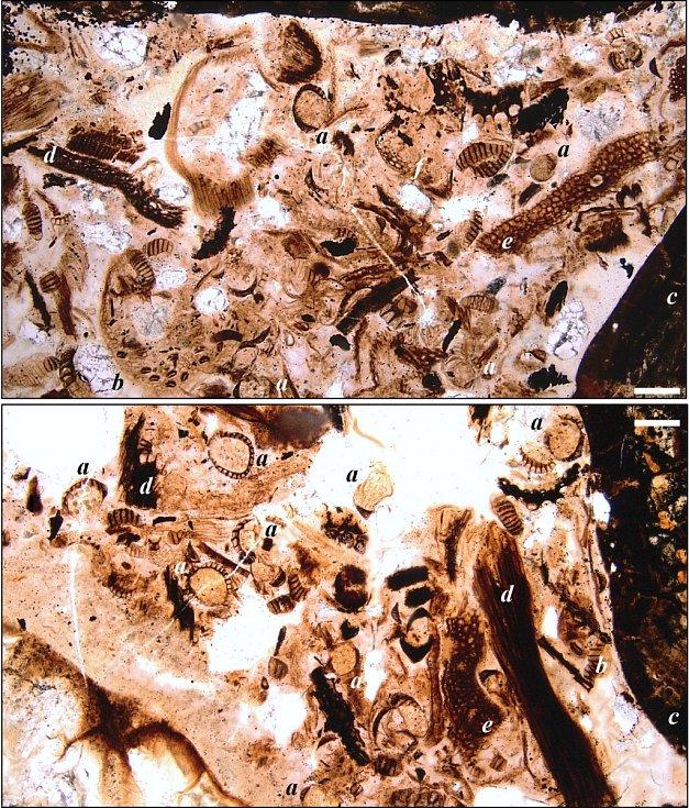 Obsah žaludku nodosaura, který uhynul před 110 miliony let