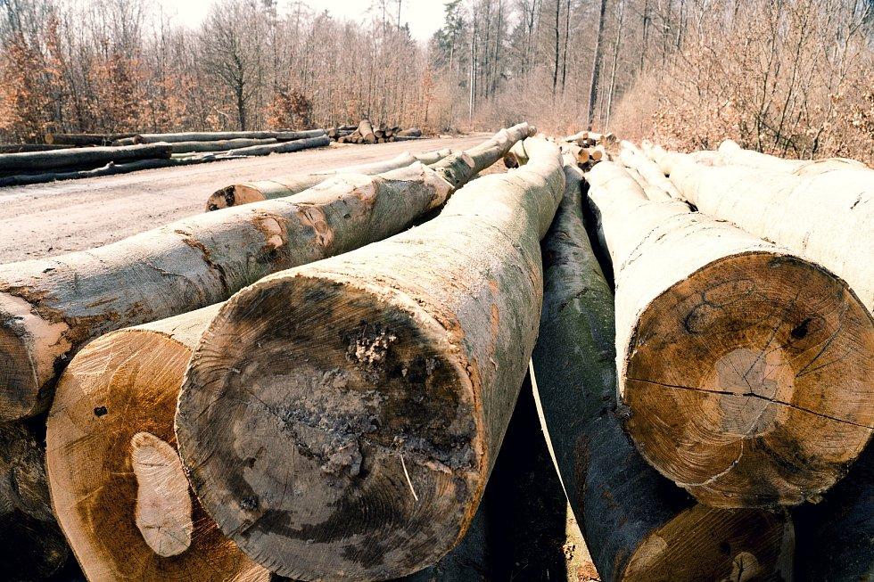 Vytěžené dřevo ve smíšeném lese u Habrůvky na Blanensku.