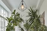 Fíkusy a další zelené rostliny v zimní zahradě vstupují díky probouranému oknu a dveřím do kuchyně.