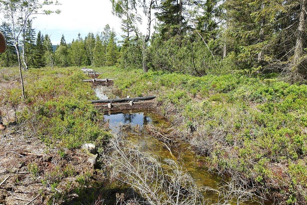 Perninské rašeliniště je přírodní památkou Jeho stáří se odhaduje na 12 tisíc let