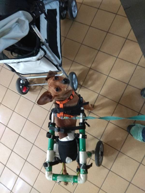 To je Barney... Tou dobou už na invalidním vozíčku po operaci páteře.