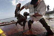 Následky ropné skvrny v Mexickém zálivu.