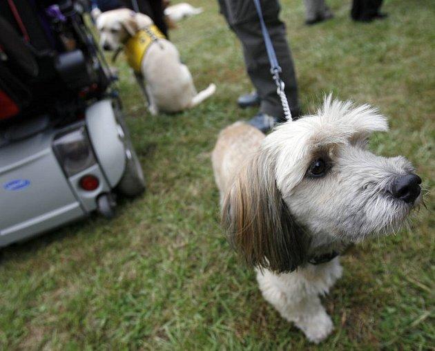 Noví asistenční psi skládali tzv. psí maturity