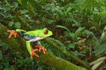 """Zbytky osídlení uprostřed honduraské džungle mohou být mytickým """"Bílým městem opičího města"""". Jisté je, že jsou dnes domovem řady vzácných živočichů"""