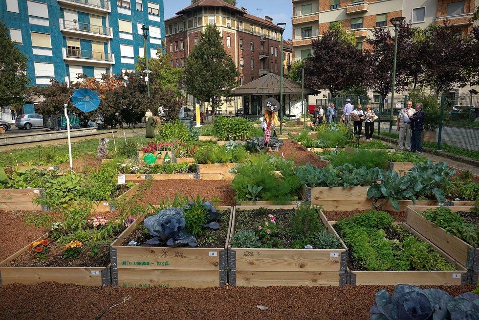 Konkrétní druhy zeleniny volte podle velikosti plochy a kvality půdy.