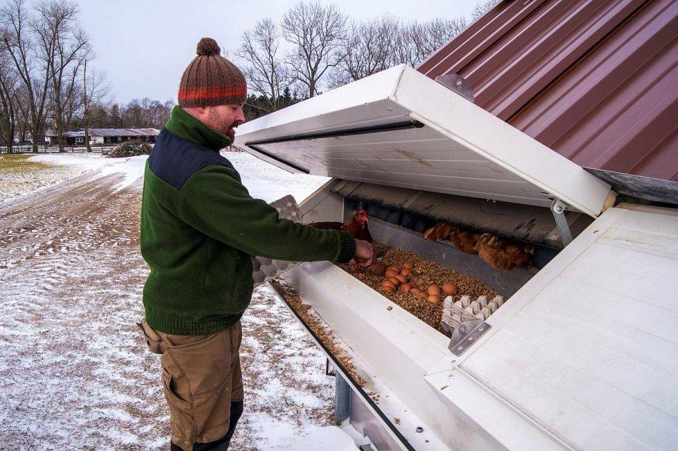 Josef Dvořák chová na svém statku 6500 slepic, které denně snesou kolem 5800 vajec.
