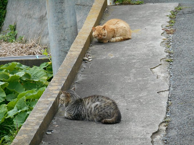 Kočky na ostrově Taširodžima