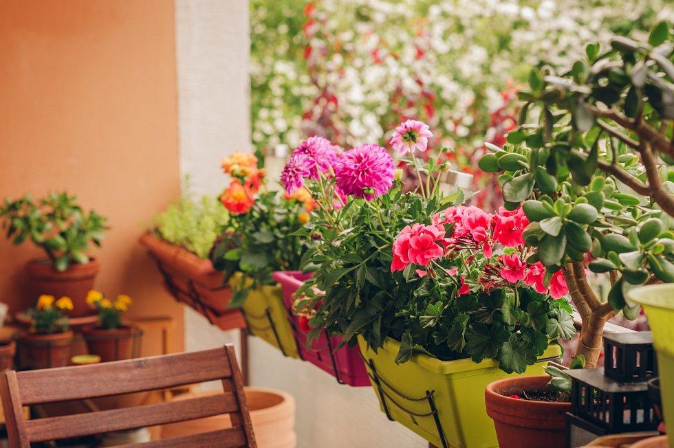 Při výsadbě různých květin do truhlíků byste měli vzít vúvahu, jaké intenzity růstu dosáhnou.