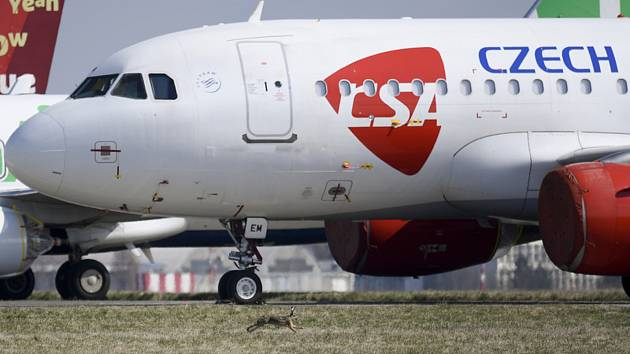 Zajíc běží kolem odstaveného letadla Českých aerolinií na Letišti Václava Havla v Praze na snímku z 29. března 2020