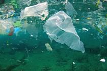 Plastový odpad představuje mořské živočichy hrozbu.