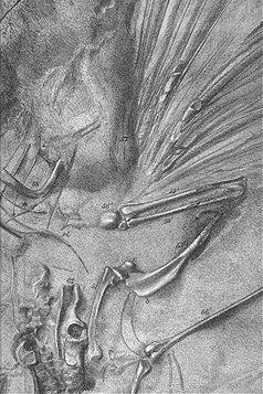 Fosilní pozůstatky dinosaura Archeopteryxe, popsaného jako druh s dlouhým ocasem. Otisk z kamene Solenhofen