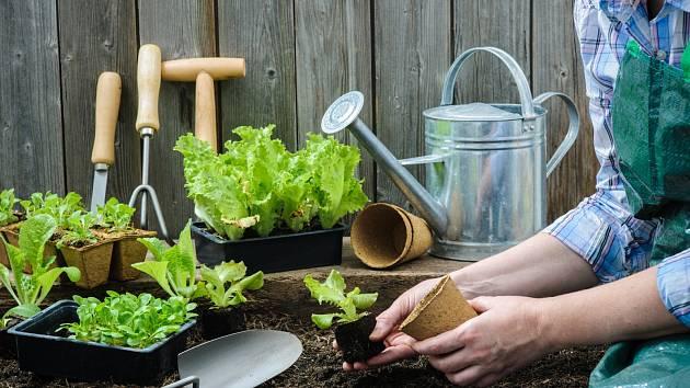 Abyste si mohli pochutnat na čerstvé zelenině, potřebuje vaše zahrada březnovou přípravu.