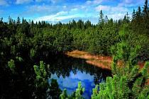 Jezerní slať na Šumavě