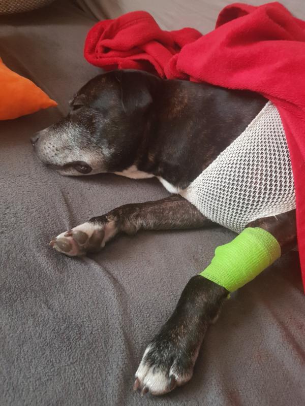 Hérečka po operaci.