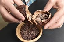 Kakaové boby. Ilustrační snímek