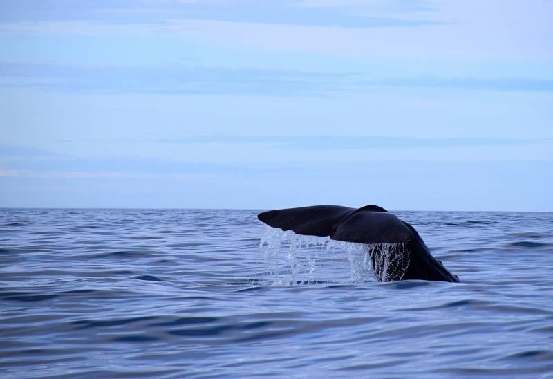 ingvisté, kybernetici, inženýři, programátoři a biologové společně s Gerym se v rámci projektu CETI (Cetacean Translation Initiative, přičemž cetaceans jsou kytovci - pozn. red.) pustí do největší mezidruhového komunikačního pokusu v dějinách této planety