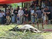 tradiční torajský pohřeb