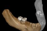 Čelist denisovana nalezená na Tibetské náhorní plošině
