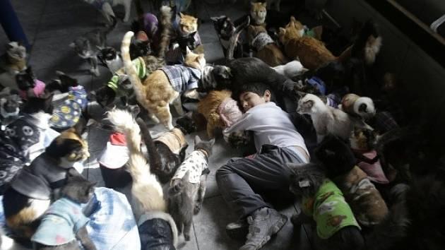 Peruánka pečuje doma o 175 koček nemocných leukémií.