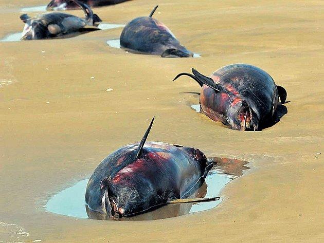 Íránci viní za smrt delfínů Američany