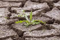 Rostlina ve vyschlé krajině, sucho. Ilustrační foto.