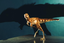 Rekonstrukce mláděte tyrannosaura rexe