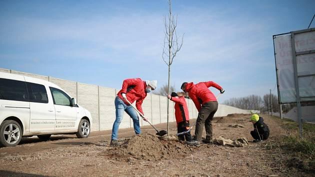 Josef a Václav Anovčínovi z hodonínské stavební firmy Plus zasadili strom společně