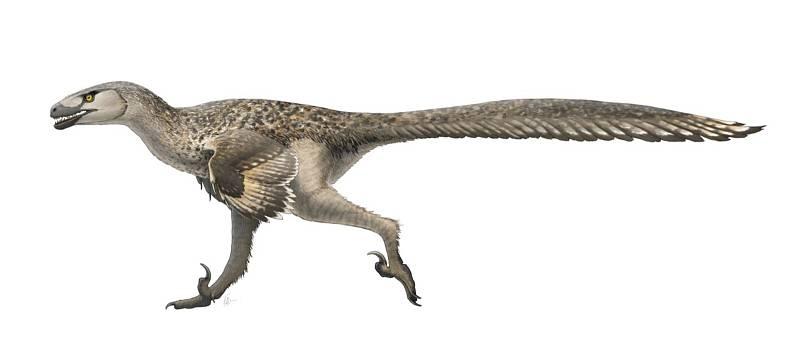 Umělecké zobrazení dinosauřích obyvatel Aljašky. Na snímku je Dromaeosaurus albertensis.