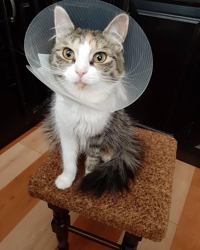 Náš pacient kočička Mouřinka.