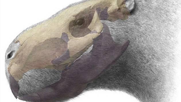 Hlava tunového hlodavce, rekonstruovaná podle nalezené půlmetrové lebky.