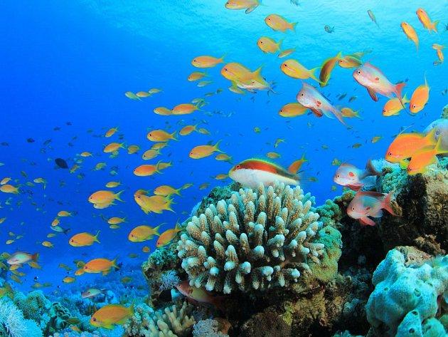 Egyptské letovisko Marsa Alam nabízí i malebné zážitky pod hladinou moře.