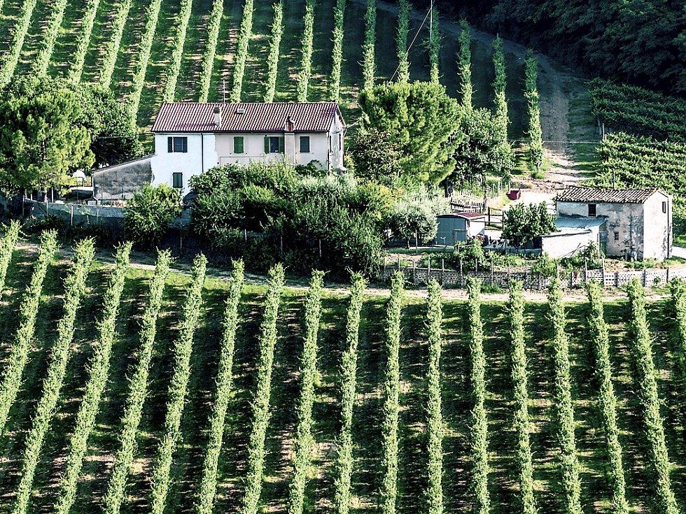VINICE V OBLASTI MARCHE. Odrůdě pecorino se nejvíce daří právě v oblastech Marche a Abruzzi.