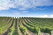 Vinice vinařství Waldberg