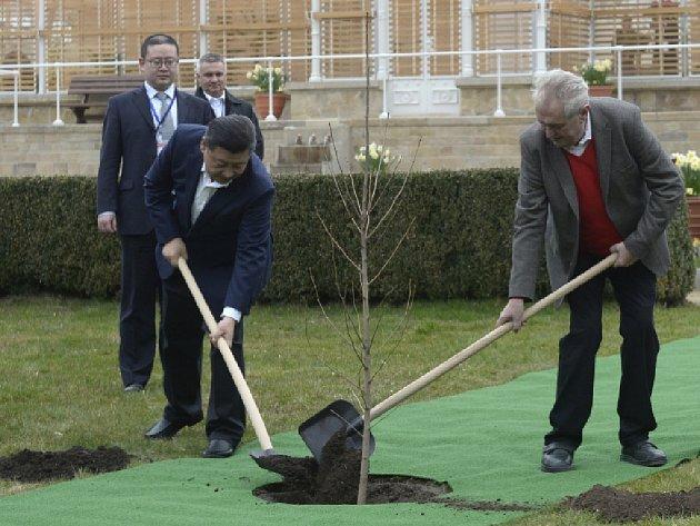 Prezident Miloš Zeman se 28. března setkal se svým čínským protějškem Si Ťin-pchingem na zámku v Lánech. Společně tam zasadili památný strom.