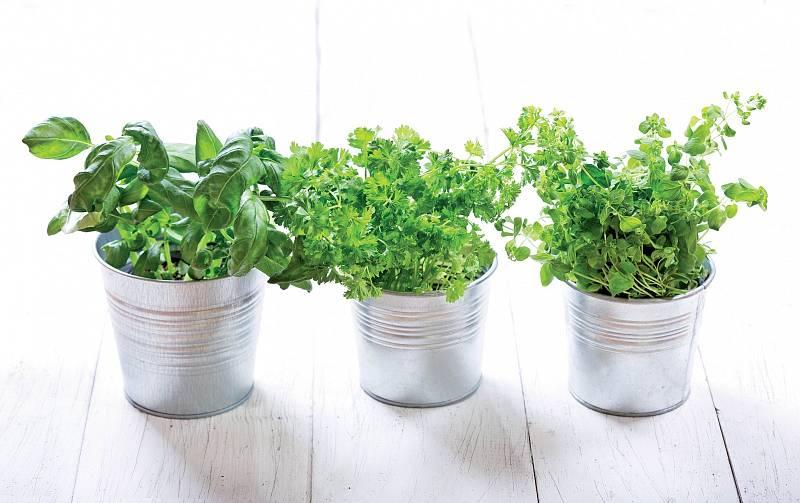 Většina oblíbených bylinek je vytrvalá amůžeme je vnádobách pěstovat venku celoročně.