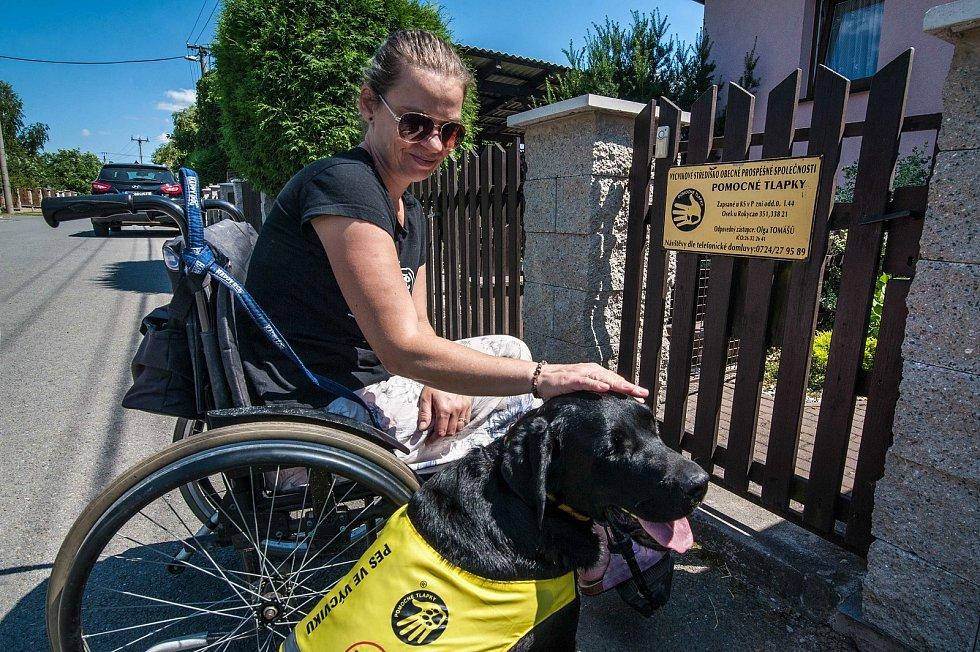 Asistenční labrador Andy po boku cvičitelky Renaty Krejčové, již schopen doprovázet svého budoucího pána.