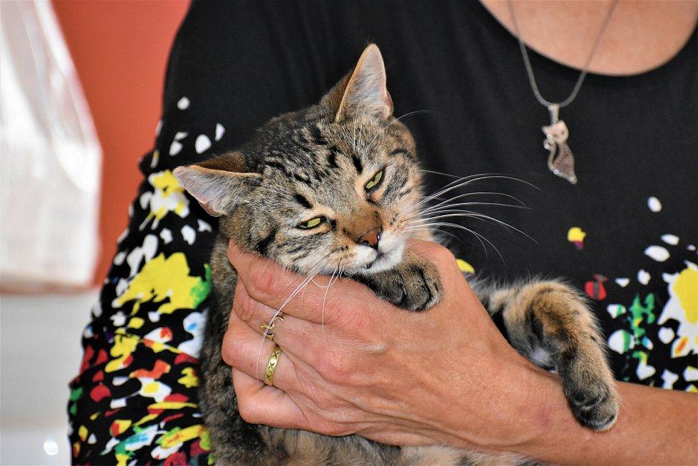 Kotě v kočičím útulku Mňau SOS v Chocni