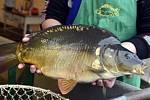 Rybáři letos nezdražují a lidé si mohou tradiční sváteční pokrm pořídit za zhruba stejnou cenu jako loni.