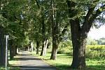 Miliony nových stromů pro Česko. Polovinu zaplatí stát, polovinu sponzoři