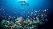 Podmořské ekosystémy