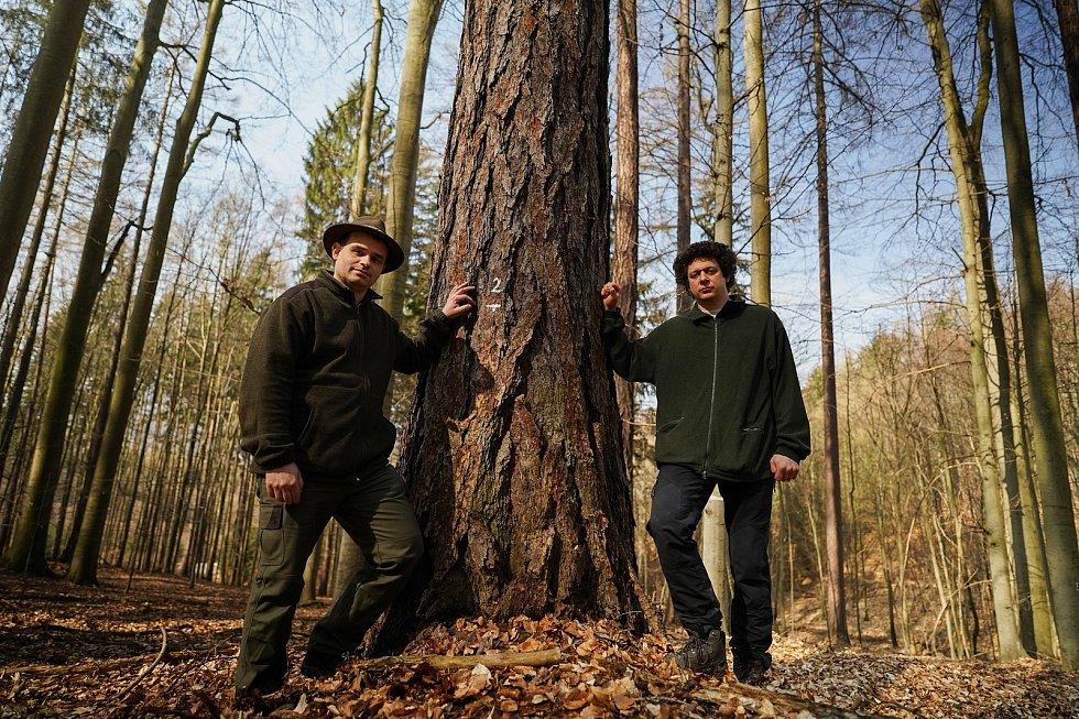 Na využití modřínů pro obnovu českých lesů se zaměří vědci. Na snímku lesník Lumír Dobrovolný (vlevo) a Jan Světlík z Mendelovy univerzity v Brně ve smíšeném lese u Habrůvky na Blanensku.