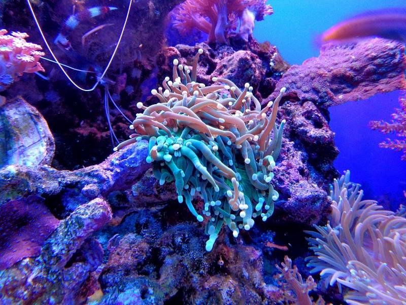 Korály chrání různé bezobratlé živočichy