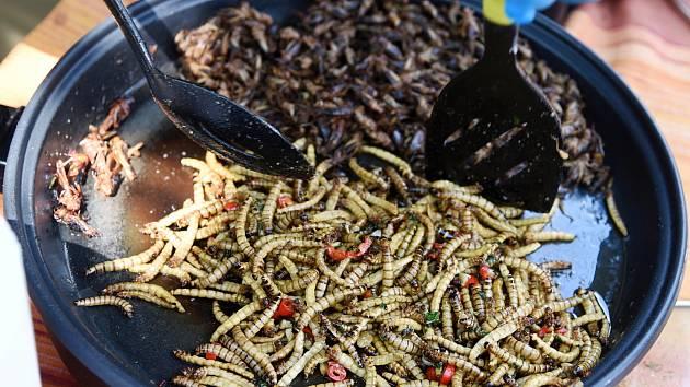 Jedlý hmyz obsahuje spoustu proteinů, není náročný na chov a chutná většinou po oříšcích.