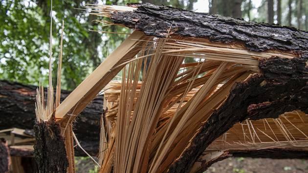 Strom zlomený po silné bouři. Ilustrační foto