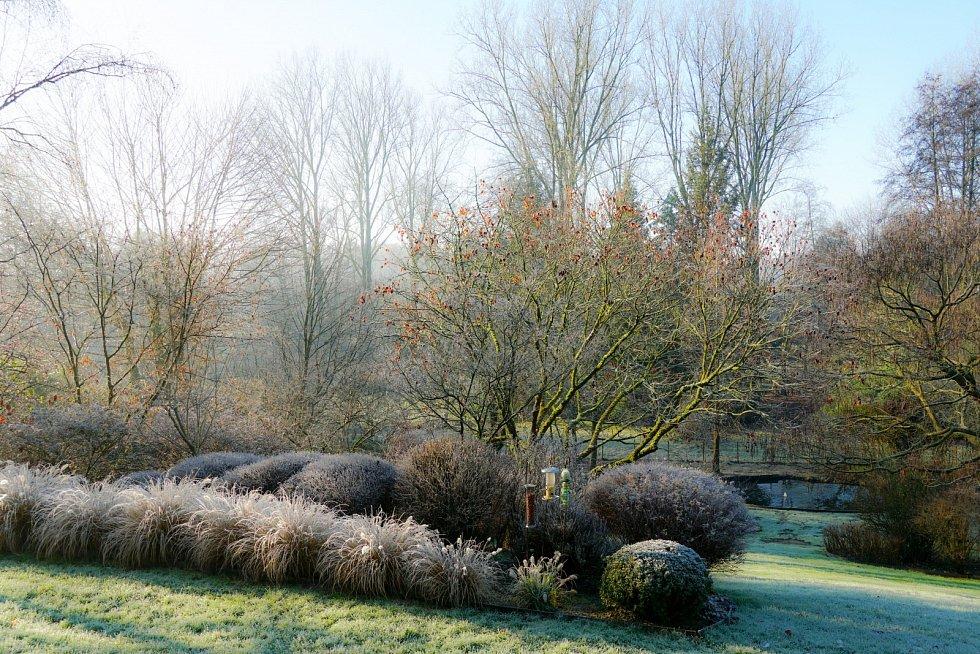 Mrazivá zima na zahradě