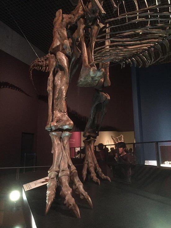 Tyrannosaurus Scotty, dosud největší objevený terapod na světě, na výstavě v Tokiu