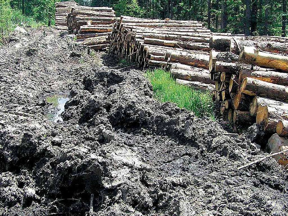 Spoušť. Výmoly po těžké mechanizaci a zničená vegetace. Tak vypadají lesy na Šumavě.