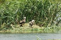 Sečení rákosin kolem Pařezného rybníku u Rudolce na Žďársku zničilo hnízda vodních ptáků.