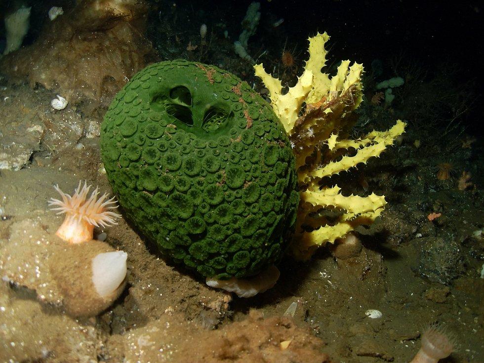 Mořské houby (houbovci) jsou, ač se to tak na první pohled nemusí zdát, živočichové