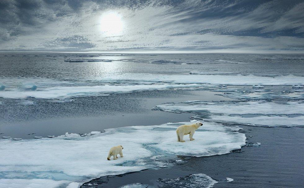 Polární medvědi na Arktidě.